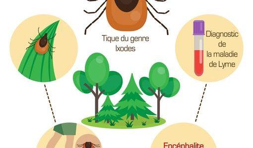 La maladie de Lyme ou borréliose de Lyme est une infection due à une bactérie transportée par une tique infectées. Toutes les tiques ne sont pas infectées par la bactérie […]
