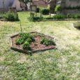 Vendredi 11 juin 2021, la classe de CE2-CM1 s'est rendue au jardin partagé pour y réaliser quelques travaux de jardinage et bricolage. Les élèves, accompagnés de leur instituteur Yann FOURNET-FAYARD, […]