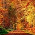 Le temps d'une balade ou d'une expo, laissez-vous séduire par les charmes de la forêt de la Comté en automne. Si la Forêt m'était Comté Espace Naturel Sensible Au coeur […]
