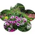 La commune de Saint Julien de Coppel participe au concours départemental du fleurissement et cadre de vie. Le conseil départemental,après visite d'un jury dans les communes, récompense celles qui […]