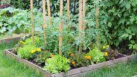 L'Amicale Laïque organise un marché aux plants de fleurs et légumes le samedi 8 mai 2021 de 8h30 à 11h30 sur le Breuil. Pour celles et ceux qui ont passé […]
